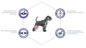 οστεοαρθριτιδα σκυλου τροφη Advance Articular Care 7+ κλινικη διαιτα ηλικιωμενων σκυλων