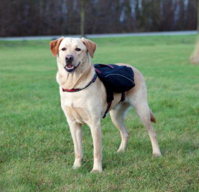 cab7623f6b00 τσαντα πλατης σκυλου Trixie σαμαρακι Neoprene Backup μεταφορα αναπηρων  σκυλων