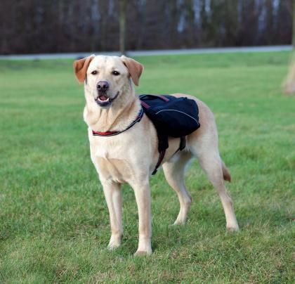 Σαμαρακι με τσαντα πλατης σκυλου Trixie Neoprene Backup