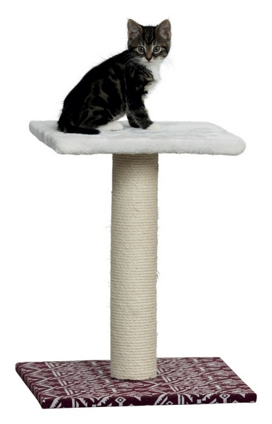 trixie carlotta ονυχοδρομια γατας