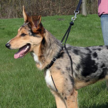 Trixie Easywalk Basic εκπαιδευτικο σαμαρακι για σκυλους