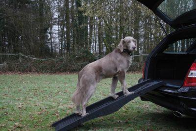 ΗNobby σπαστη ραμπα σκυλου πλαστικη για αυτοκινητο