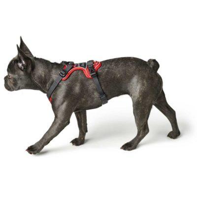 Hunter Divo εκπαιδευτικα σαμαρακια σκυλου για ελεγχο στη βολτα
