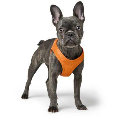 Hunter Hilo δερματινο σαμαρακι επιστηθιο λουρι σκυλου μικρης φυλης